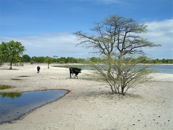 BGR - Groundwater - Dramatic water supply problems in