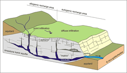 Block diagram of a heterogeneous karst aquifer illustrating the duality of recharge